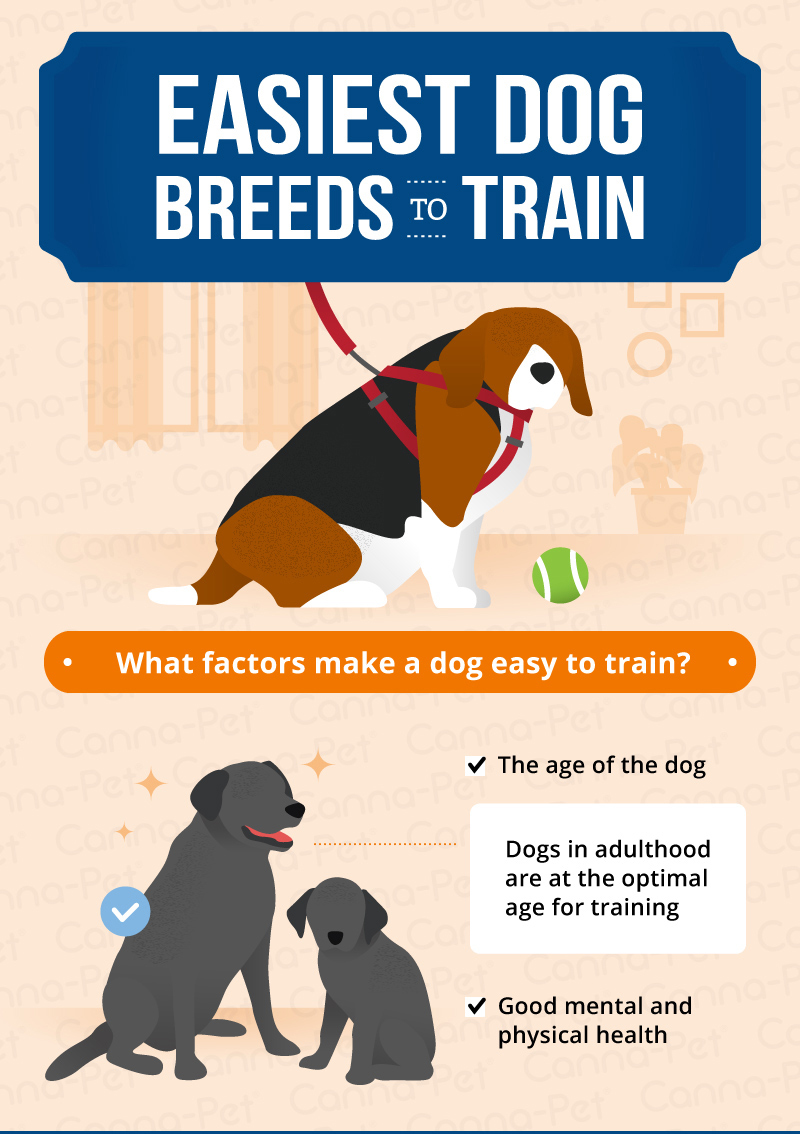 easiest dog breeds to train/what factors make a dog easy to train
