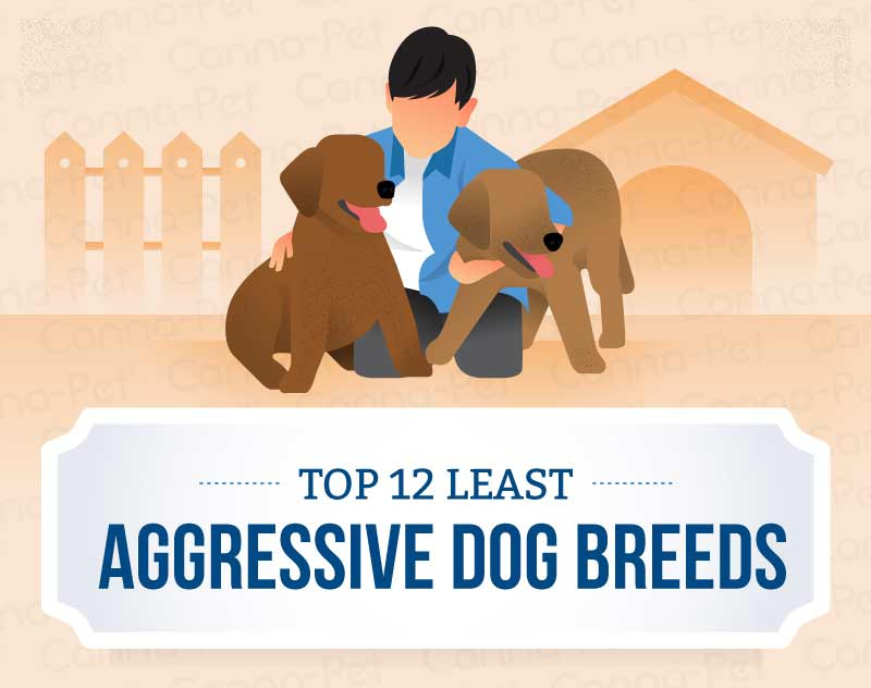 top 12 least aggressive dog breeds