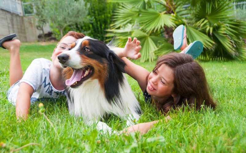 are australian shepherds good family dogs_canna-pet