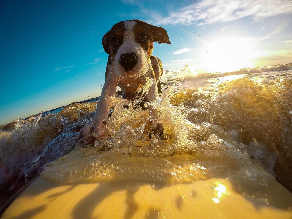 dog breeds that love water_canna-pet