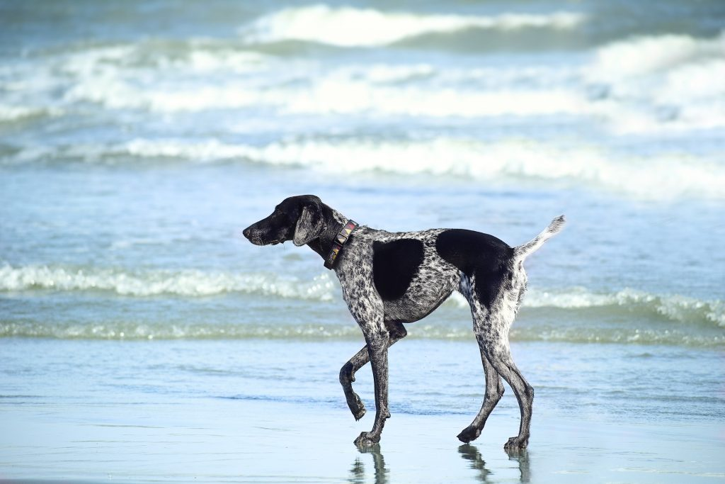 how do dogs maintain homeostasis_canna-pet