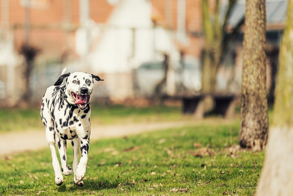 ringworm in dogs_canna-pet