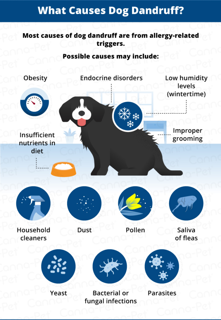 Dog Dandruff: Causes, Signs, & Treatments | Canna-Pet®