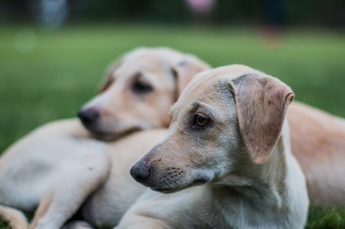 Sarcoptic Mange in Dogs: Signs & Symptoms | Canna-Pet®
