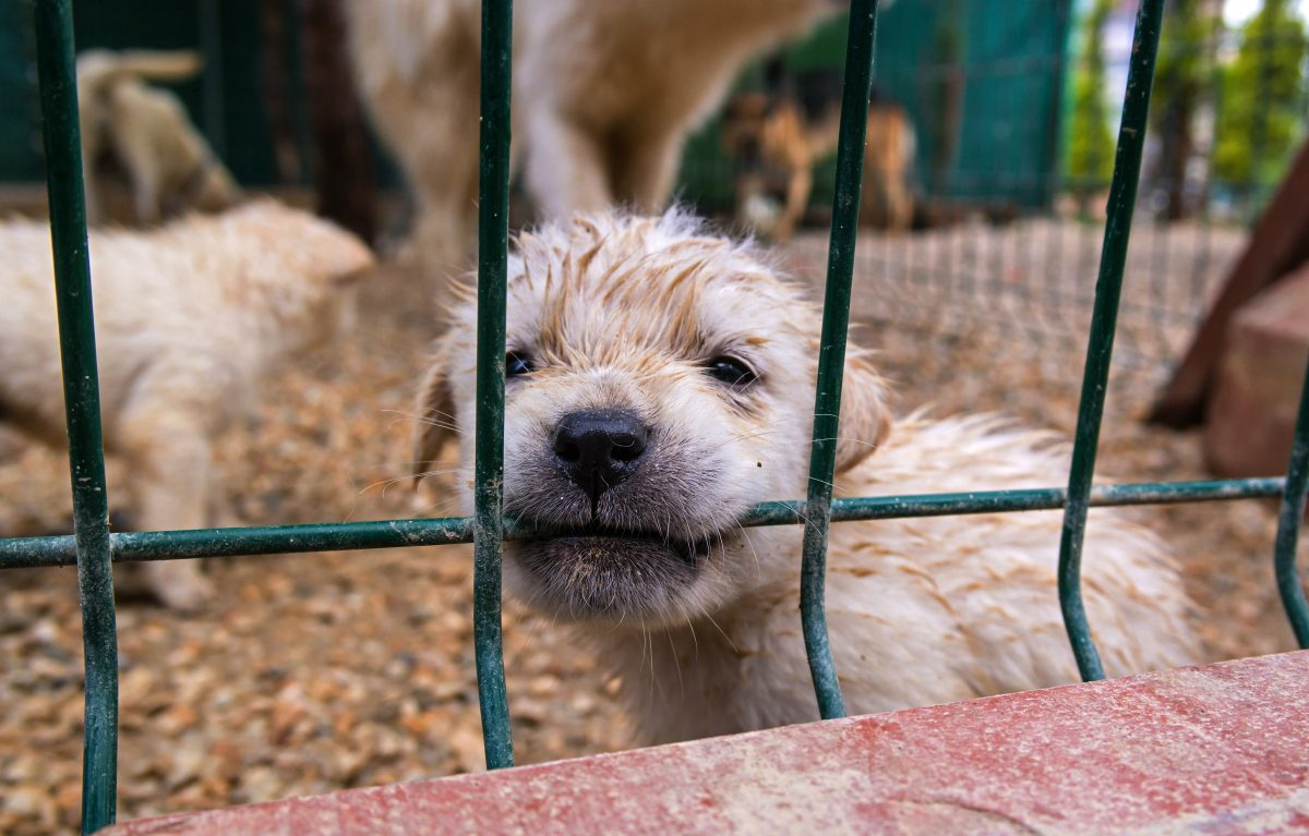 mange in dogs_canna-pet