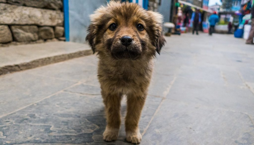 sarcoptic mange in dogs_canna-pet