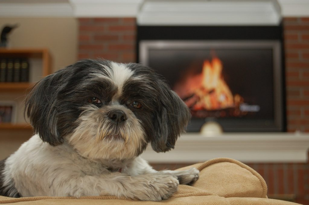 Shih Tzu Temperament And Personality Canna Pet