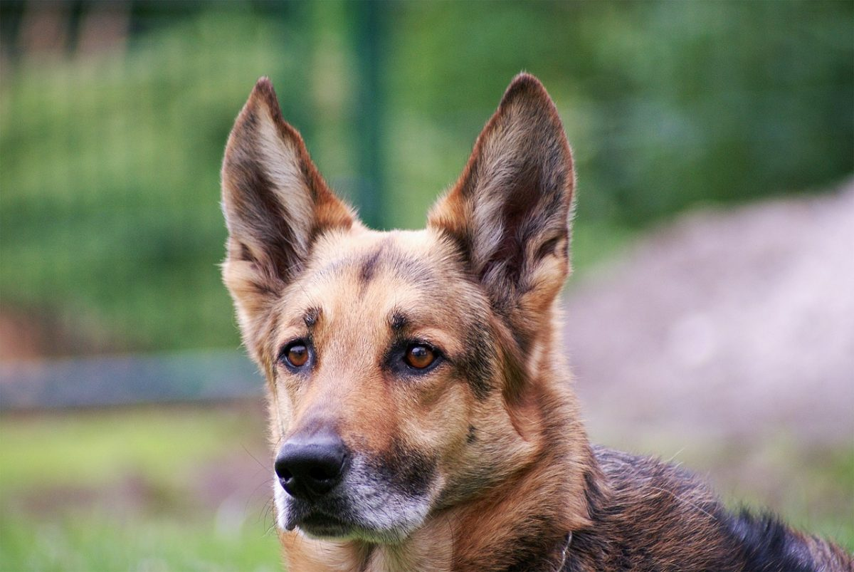 what causes fatty tumors in dogs_canna-pet