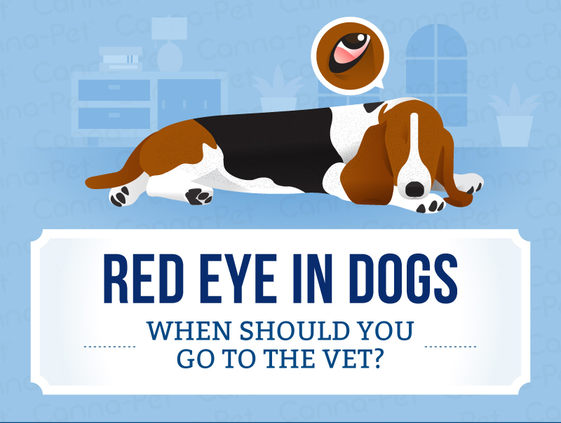 red eye in dogs