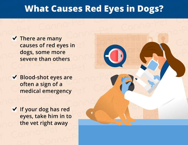 red eye in dogs causes