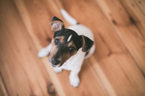 side effects of phenobarbital for dogs_canna-pet