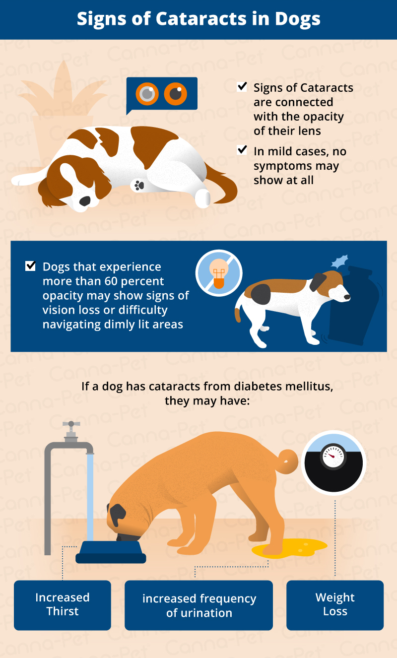 signs of dog cataracts