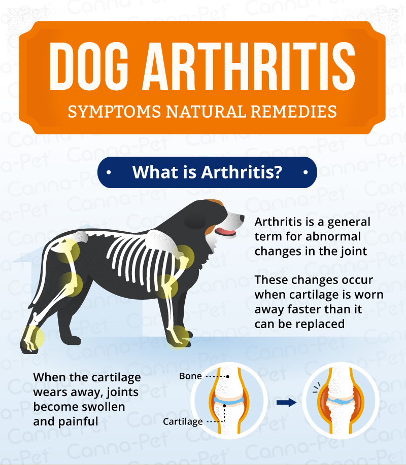 Natural Remedies For Dog Joints