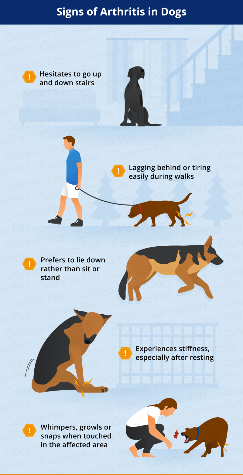 signs of dog arthritis