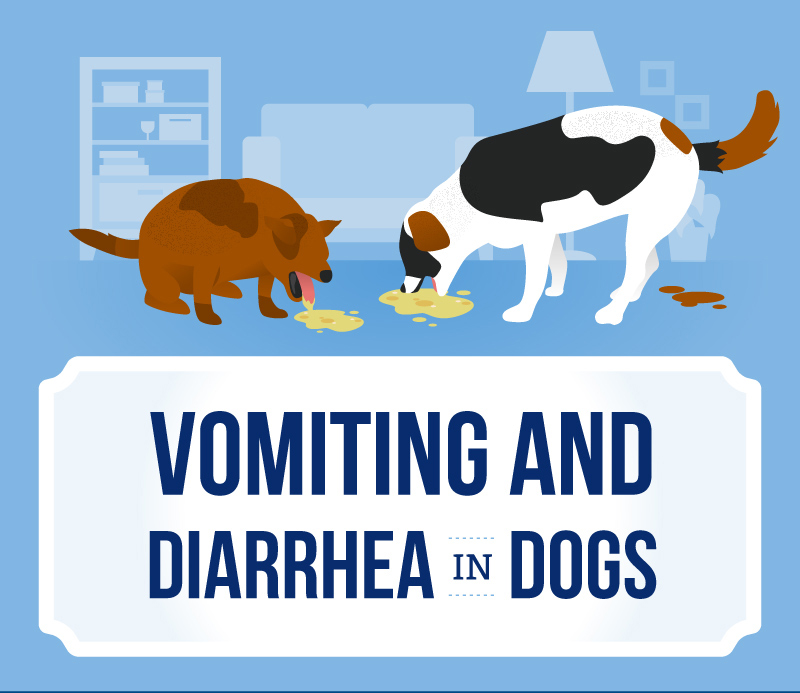 vomiting and diarrhea in dogs