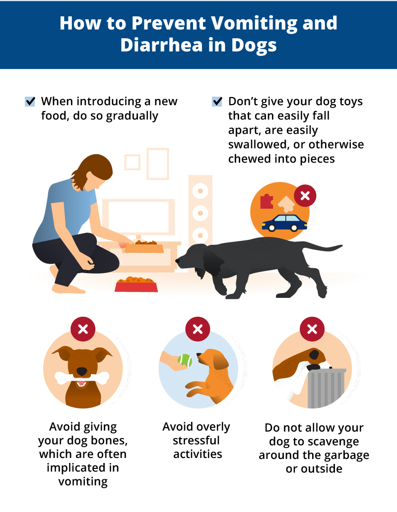 how to prevent dog vomiting & diarrhea