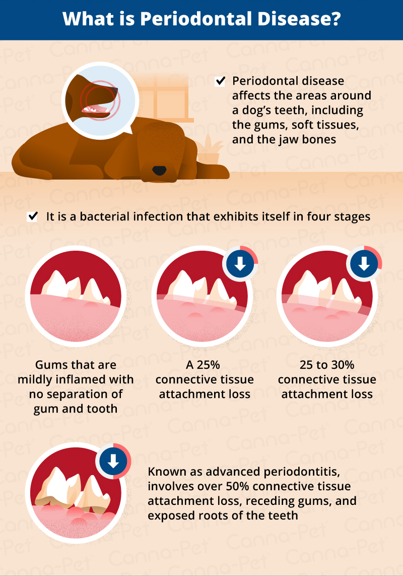 periodontal disease in dogs
