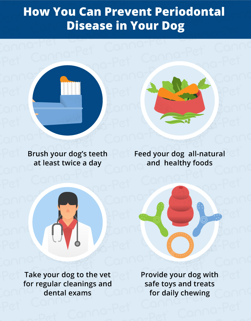 preventing periodontal disease in dogs
