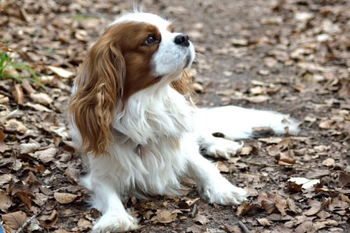 fainting in dogs: what to do