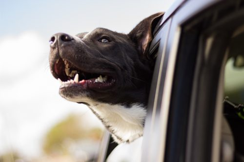 dramamine for dogs side effects_canna-pet