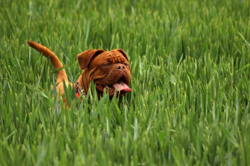 metoclopramide for dogs side effects_canna-pet