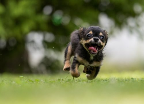 prozac for dog anxiety_canna-pet