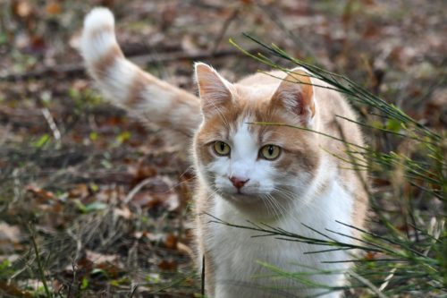 rimadyl for cats side effects-canna-pet