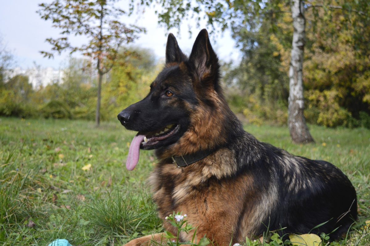 side effects of rimadyl for dogs_canna-pet
