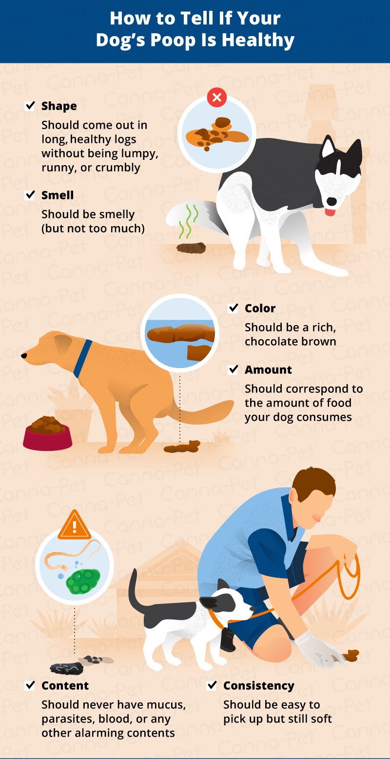 how to tell if your dogs poop is healthy_canna-pet