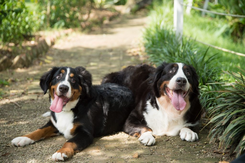 can lyme disease cause paralysis in dogs_canna-pet