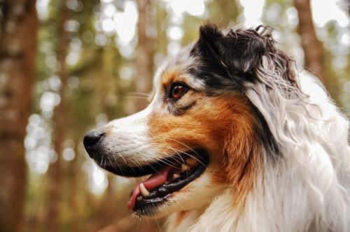 can lyme disease in dogs be cured_canna-pet