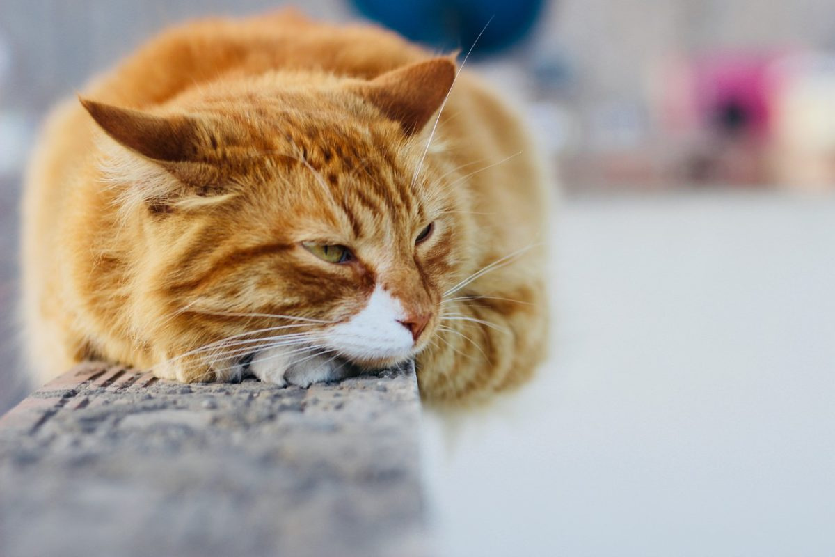 Blood in Cat Stool: What Does It Mean?