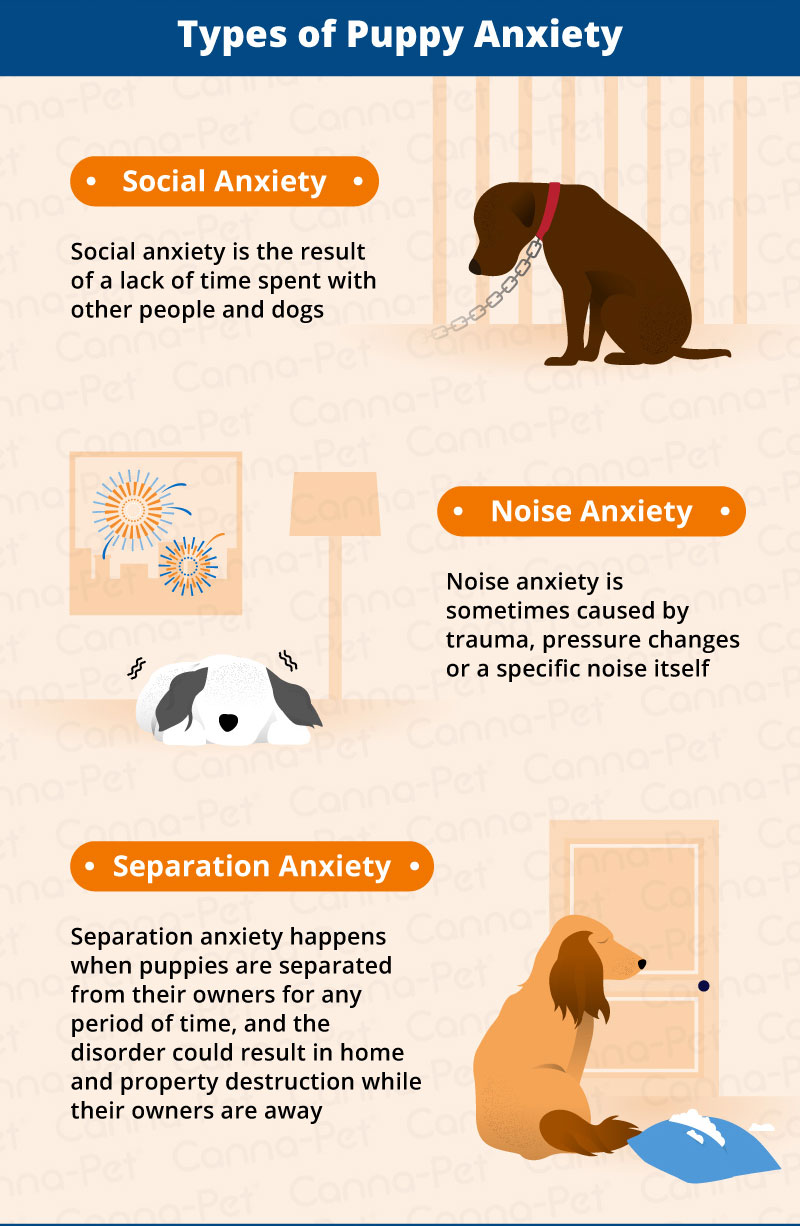 Puppy Anxiety Symptoms Management Canna Pet