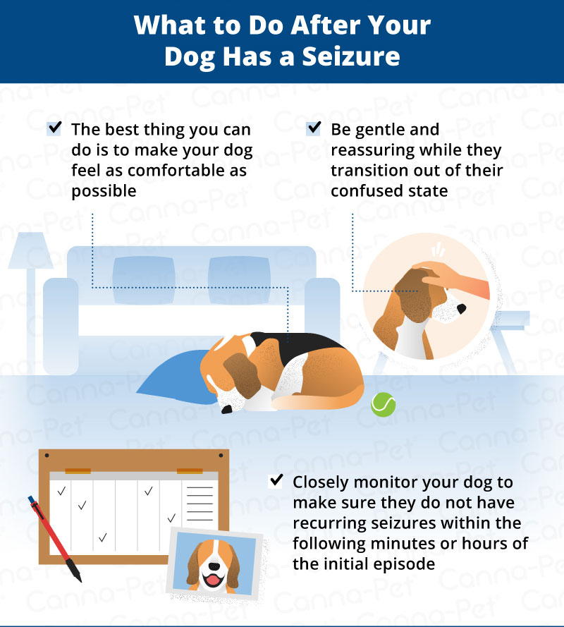 Multiple Seizures In Dogs In One Day