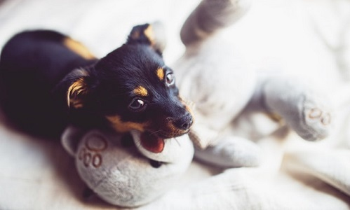 What is DHPP for Dogs?   Canna-Pet®