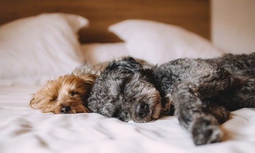 Side Effects of the Bordetella Vaccine for Dogs | Canna-Pet®