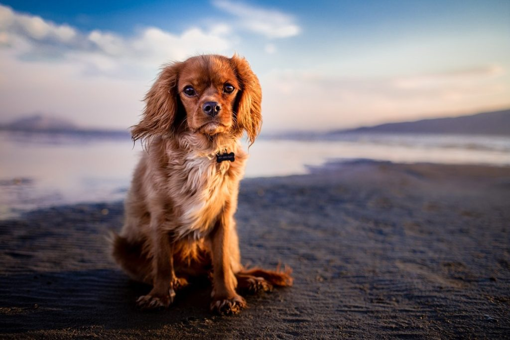 Does Neutering Your Dog Calm Them Down?  Canna-Pet®