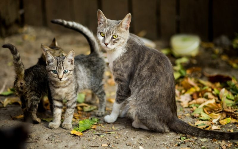 How Long Are Cats Pregnant For Archives Canna Pet