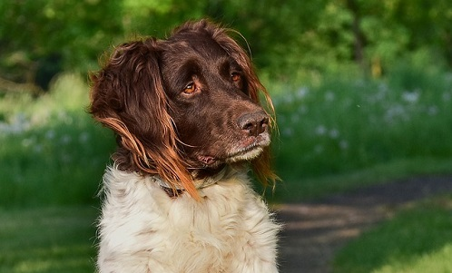 What Causes Scabs on a Dog's Ear? | Canna-Pet