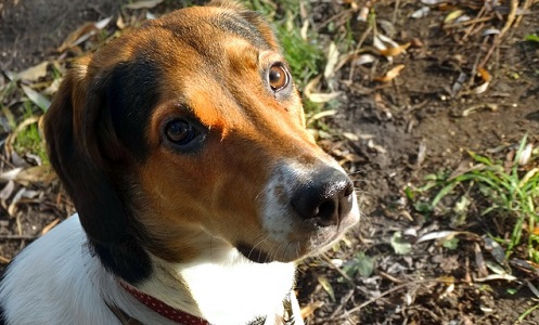 Is My Dog's Leg Broken or Sprained? | Canna-Pet