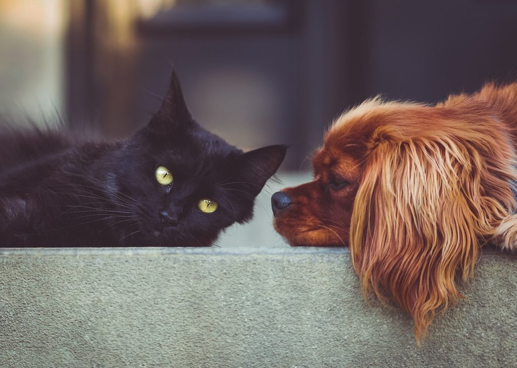 Quiz: What Is Your Pet Health IQ? - Canna-Pet®