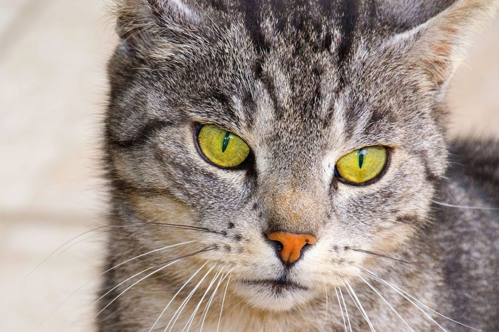What Is The Average Lifespan Of A Cat Canna Pet