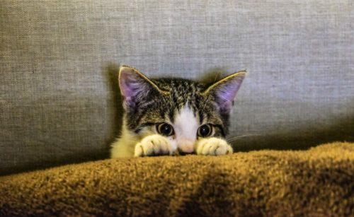 Why is My Cat Farting? | Canna-Pet®