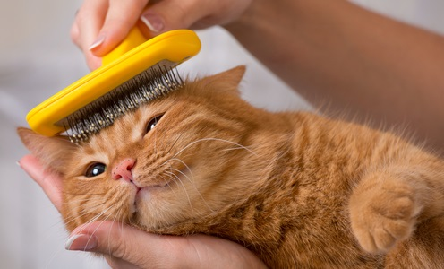 Hairballs in Cats: Causes & Treatments | Canna-Pet